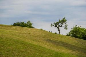 Tree on a hill photo