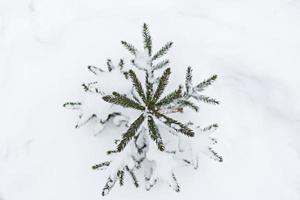un pequeño árbol de Navidad cubierto de nieve aparece debajo de la nieve en el bosque. vacaciones navideñas foto
