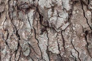 Close up dry tree bark texture background photo