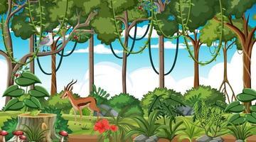 Rainforest at daytime scene with different wild animals vector