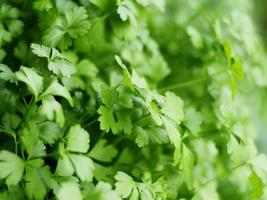 Fresh parsley green abstract background photo