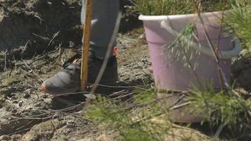 plantando mudas de árvores video