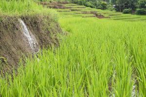 Terrazas de arroz verde en Filipinas. foto