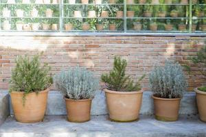 Clay pots with cactus photo