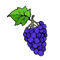 The grapes are drawn by a liner by hand, then traced and processed in an illustrator. Vector grapes in doodle style. Design element for printed matter and fabric