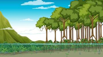 Nature scene with Mangrove forest at daytime in cartoon style vector