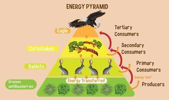 Diagrama que muestra la pirámide de energía para la educación. vector