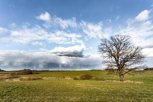 Solo viejo roble sin hojas de pie solo en el campo espectacular cielo con nubes de tormenta primavera concepto de clima cambiante foto