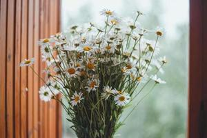Daisies on a blurry background with bokeh photo