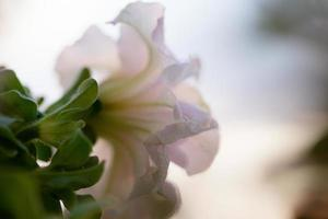 Pastel flower in misty conditions photo