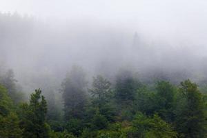 Misty forrest during autumn rainy season photo