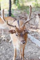 Wild deers natural habitat family friendly wild park photo