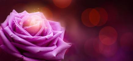 rosa púrpura rojo día de san valentín bokeh banner foto