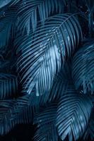 hojas palma abstracta hojas tropicales flor colorida en follaje tropical oscuro fondo de naturaleza follaje azul oscuro naturaleza foto
