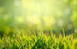 Green grass in the golden sun in the morning and there is free space on the top. photo