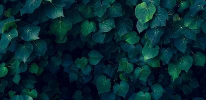 tropical leaves colorful flower on dark tropical foliage nature background dark green foliage nature photo