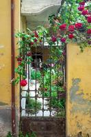 Puerta de entrada de una casa decorada con una rosa roja. foto