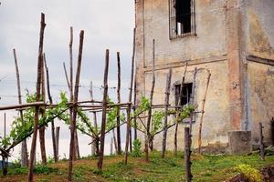 Springtime panorama of the vineyards in the hilly winery region of Novarese photo