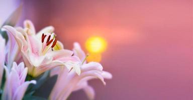 lirio rosa en el jardín y color de tono rosa, flores de lirio dof bajo banner natural foto