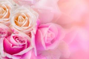 Pink roses Background blur Valentine photo