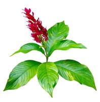 Exotic red bouquet of white background used to design the isolate. photo