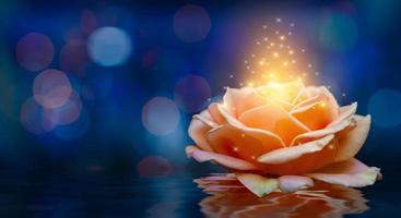 Orange roses light Bokeh floating blue background Valentines Day photo