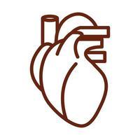 cuerpo humano corazón venas anatomía órgano salud línea icono estilo vector