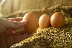 Hand picking an egg from husk for cooking with Golden light photo