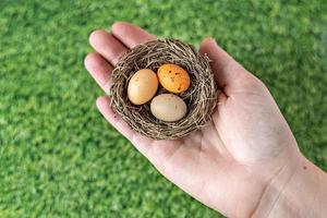 Easter eggs in a natural nest with bird eggs in a female hand on a background of green grass. View from above photo