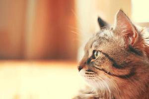 perfil de gato que mira hacia la izquierda. foto