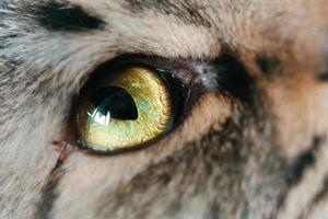 primer plano de ojos verdes de gato. foto