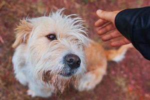 hombre acariciando perro. foto