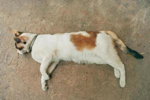 Cute white cat resting on the ground. photo