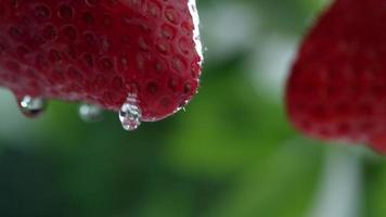 primer plano extremo de goteo de agua en fresa en cámara lenta filmada en phantom flex 4k a 1000 fps video