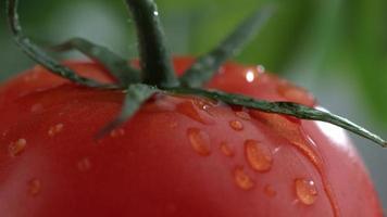 primer plano extremo de goteo de agua sobre tomate en cámara lenta filmada en phantom flex 4k a 1000 fps video