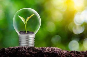la bombilla está ubicada en el interior con hojas de bosque y los árboles están en la luz. Conceptos de conservación del medio ambiente y el calentamiento global de plantas que crecen dentro de la bombilla de la lámpara sobre seco foto