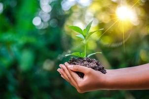 Earth Day In the hands of trees growing seedlings. Bokeh green Background Female hand holding tree on nature field grass Forest conservation concept photo