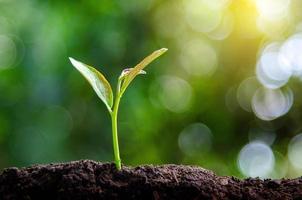 Plantar plántulas de plantas jóvenes en la luz de la mañana sobre fondo de naturaleza foto