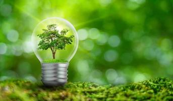 The bulb is located on the inside with leaves forest and the trees are in the light. Concepts of environmental conservation and global warming plant growing inside lamp bulb over dry photo