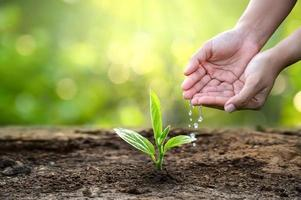 hand Watering plants tree mountain green Background Female hand holding tree on nature field grass Forest conservation concept photo