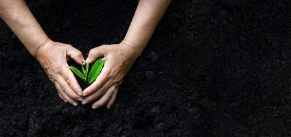 environment Earth Day In the hands of trees growing seedlings. Bokeh green Background Female hand holding tree on nature field grass Forest conservation concept photo