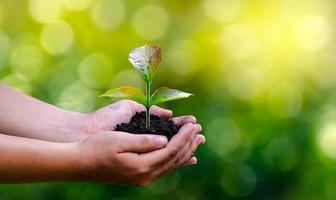 medio ambiente en manos de árboles que cultivan plántulas. Bokeh de fondo verde mano femenina sosteniendo el árbol en el campo de la naturaleza concepto de conservación de bosques de hierba foto