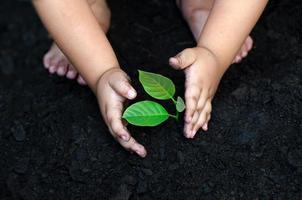 árbol joven mano de bebé en el suelo oscuro, el concepto implantó la conciencia de los niños en el medio ambiente foto