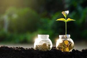 medalla de oro, moneda, árbol, tarro de cristal, planta, crecer, de, monedas, exterior, el, tarro de cristal, en, borroso, verde, natural, plano de fondo foto