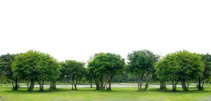 banner de fondo blanco de árbol de panorama foto