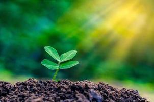 día mundial del medio ambiente plantación de plántulas planta joven a la luz de la mañana sobre fondo de naturaleza foto