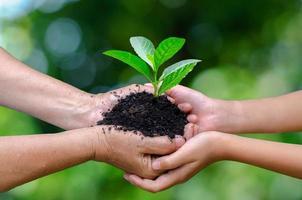 Adults Baby Hand tree environment Earth Day In the hands of trees growing seedlings. Bokeh green Background Female hand holding tree on nature field grass Forest conservation concept photo
