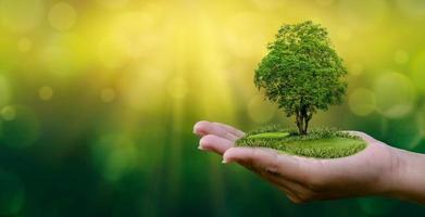 medio ambiente día de la tierra en manos de árboles que cultivan plántulas. Bokeh de fondo verde mano femenina sosteniendo el árbol en el campo de la naturaleza concepto de conservación de bosques de hierba foto