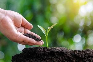 tree sapling hand planting sprout in soil with sunset close up male hand planting young tree over green background photo