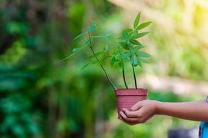 en manos de árboles que crecen plántulas. Bokeh de fondo verde mano femenina sosteniendo el árbol en el campo de la naturaleza concepto de conservación de bosques de hierba foto